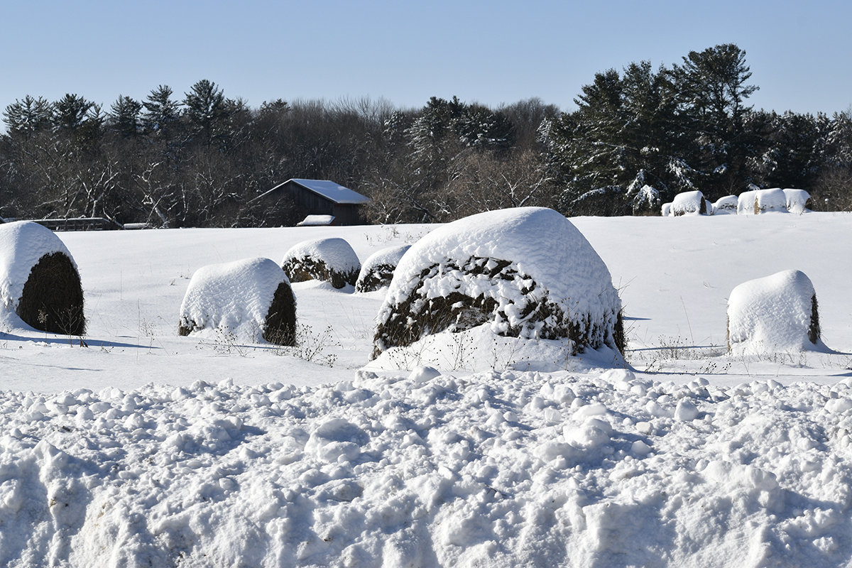 Photo of hay bales covered with snow.